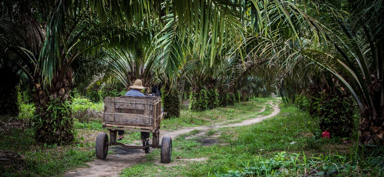 Bolsonaro en effectieve bossendiplomatie: handel als hefboom